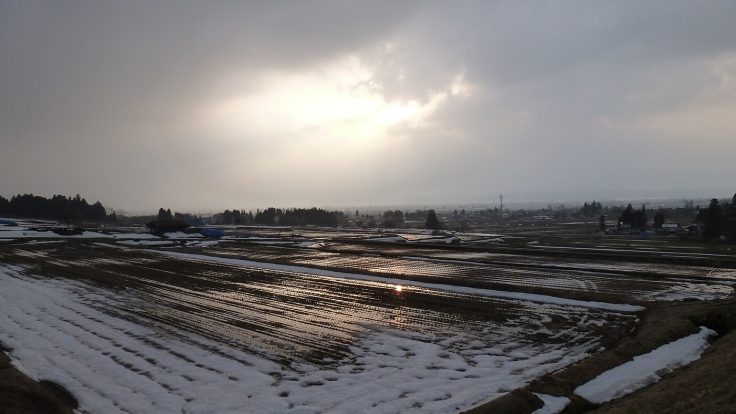 Snow melting on rice fields.  Photo and permission Su Grierson