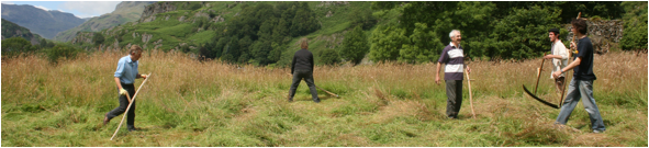 Merz Meadow - scythers cutting hay on the meadow above Kurt Schwitters Merz Barn, Cumbria July 2011