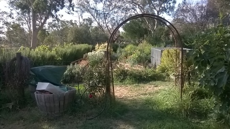 The Avoca Project garden, photo Anne Douglas