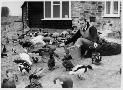 scott feeding wildfowl