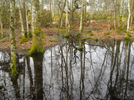 Woodland Wetland